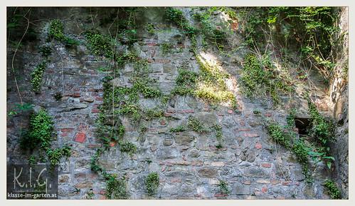 NOE, Stift Klosterneuburg Gaerten: Konventgarten | 2014-06