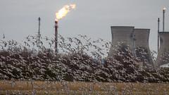 Grangemouth (gavmroberts1984) Tags: birds canon scotland flames refinery mudflats grangemouth falkirk 700d