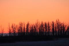 Sunset (Willie Kalfsbeek) Tags: trees sunset alaska glow ak willie kalfsbeek