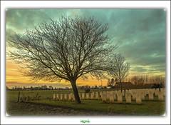 LE GRAND HASARD MILITARY CEMETERY  MORBECQUE (2) (rgisa) Tags: france tree cemetery military grand boom arbre baum hazard nord militaire cimetire britannique hasard morbecque fentressur