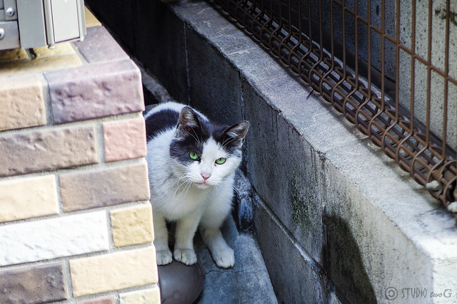Today's Cat@2015-03-02