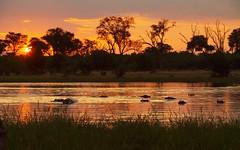 Sundown in Moremi, Botswana (Hammerhead27) Tags: sunset orange sun game tree water river glow wildlife reserve safari hippo botswana moremi