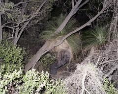 Density, Leeuwin NP. (caughtkneeh) Tags: 6x7 westernaustralia density downsouth leeuwin