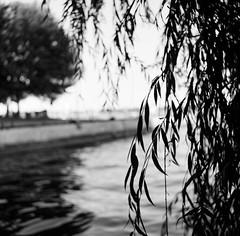 (g026r) Tags: 120film flexaret flexaretii flexaretiia meopta meoptaflexaret roll112 shanghai shanghaigp3 tlr bw film fixedlens gelatinsilver manualfocus mediumformat panchromatic presetaperture primelens twinlensreflex toronto ontario canada