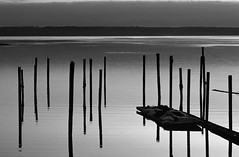 Pilings along Puget Sound sunset light with dock and nets on Bellingham Bay Washington State USA (Jim Corwin's PhotoStream) Tags: sunset blackandwhite bw nature water horizontal photography dawn support pattern quiet waterfront patterns tide peaceful tranquility nobody row foundation rows serenity manmade bellingham environment weathered pugetsound isolation serene pilings stark washingtonstate piling sidebyside climate tranquil sparse tranquilscene weathering woodensticks sparseimage woodenposts woodposts bellinghamwaterfront builtstructure
