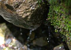 IMGP0846_lzn (Dreams of Evergreens) Tags: water moss mossy rock drip stream shadows