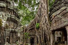 Ta Prohm 2, Angkor (Siem Reap) (bienve958) Tags: camboia siemreap taprohm krongsiemreap camboya kh khmerkingjayavarmanvii mahayanabuddhist angkor temple angkoriantemples worldheritageunesco colefranaisedextrme trees patrimoniodelahumanidad ficusgibbosa arbol cambodia arquitecturajemer estilobayon yourbestoftoday