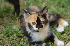 Ospite adottato (francesco_43) Tags: felini gatto micio gattini