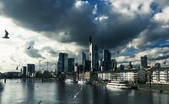 Tierisches Stadtleben (Kevin Chileong Lee) Tags: skyline de deutschland cityscape hessen frankfurt sommer main wolken boote architektur vgel fluss mwen schiffe frankfurtammain wolkenkratzer hochhuser
