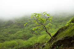 Misty Feeling (Ali Sabbagh) Tags: mist plant tree bush nature travel world oman green life salalah canon eos7d flickr