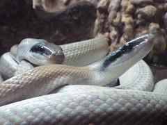 DSCF0166 (Stonehenge 68) Tags: zoo birmingham snake alabama lizard plantation antebellum birminghamzoo arlingtonhouse