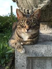 IMG_0963 (deniseclark4) Tags: sun green urn garden eyes sweet laying