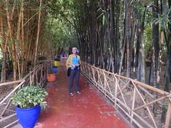 DSCN2665 (dbohaty) Tags: jardin majorelle morocco almaghrib