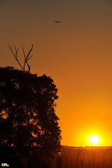 Golden hour (Otacílio Rodrigues) Tags: sun tree sol nature yellow brasil plane golden natureza céu dourado amarelo pôrdosol avião árvore itatiba oro