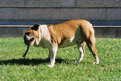 Giocando ai giardini... (sirio174 (anche su Lomography)) Tags: cane dog gioco giocare play playing como