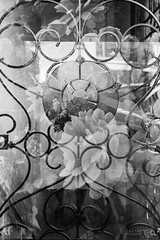 Flower Double (Taomeister) Tags: flowers grate doubleexposure pointandshoot pentaxiqzoom90wr