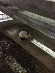 (findup) Tags: japan kitten fukuoka