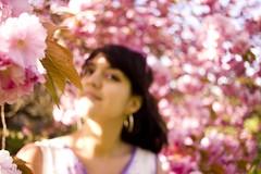 kew, kew gardens, richmond, kew gardens richmond, royal garden, royal parks, royal kew, cherry blossom, sakura, cherryblossom, hanami, kew gardens sakura, japanese garden, kew japanese garden, kew zen garden (laylailalay) Tags: kew kewgardens richmond kewgardensrichmond royalgarden royalparks royalkew cherryblossom sakura hanami kewgardenssakura japanesegarden kewjapanesegarden kewzengarden