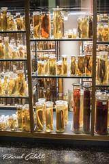 The Archive (Patrick Ciebilski) Tags: berlin germany natural history museum animal evolution biology