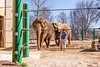 Zoo Louisville-5847 (TeamHuerta) Tags: louisvillezoo 2016 ky zoo elephant spring