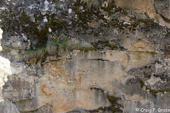 Johnston Canyon-1190.jpg (CraigG144) Tags: alberta banffnationalpark johnstoncanyon