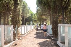 Cemetery Lanes (Allison Mickel) Tags: nikon d7000 adobe lightroom edited turkey gallipoli history museum war wwi battle monument memorial cemetery