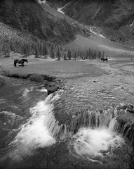 Horses, Gradenbach, Hohe Tauern (Black and White Analog Landscape Photography) Tags: analogue austria acros nature landscape film wilderness mountains mamiya7ii hohe tauern