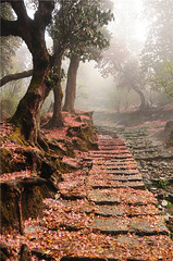 way to beauty (H y (hyunshiksantosh)) Tags: nature poonhill pokhara