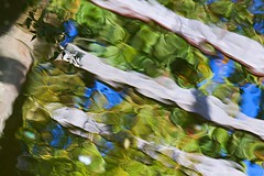 Tranquil Pergola Pond Reflection (fstop186) Tags: tranquil pergola reflection water pattern random pond