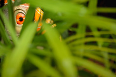 I'm watching you (dave.fergy) Tags: holidays florafauna plants bodypart people abstract green eye orange leaves leaf singapore sg events