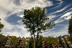 272 - City Tree (kosmekosme) Tags: amsterdam canal canals brouwersgracht sky clouds cloud cloudy blue bluesky building buildins window windows tree trees green lantern lamp street sun sunny