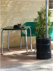Mittagsruhe * Siesta *    . P1310670-001 (maya.walti HK) Tags: 2016 barlaventa cats copyrightbymayawaltihk espaa flickr gatos katzen laventa spain spanien ventaceferino