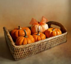 Pumpkin Basket.    (Through Serena's Lens) Tags: pumpkin orange white ribbon basket tray stilllife texture tabletop