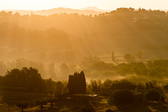 Golden Hills (luca_pictures) Tags: marche italy goldenlight golden sunrise sunlight rays trees hills earlymorning outdoor travel daylight