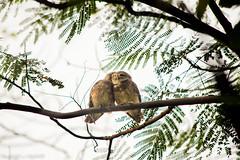 ||    ... || (NahidHasan95) Tags: bird wildlife wildbird winter love lastlight sunlight green nature animal outdoor bangladesh