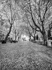 Amsterdam Avenue (buddythunder) Tags: europe 2016 travel avenue cobbles cobblestones trees lines leadin blackandwhite bw distant figure person silhouette amsterdam netherlands wideangle