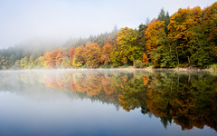 Bergsee Bad Sckingen (Nelus Photography) Tags: forest wald outdoor natur nature europa europe deutschland germany blackforest schwarzwald gelb rot orange red yellow spiegelung lake water reflection fall herbst fog nebel trees bume baum tree