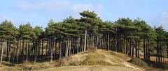 Nationaal Park Zuid-Kennemerland (bugman11) Tags: landscape tree trees nature nederland nikon thenetherlands zuidkennemerland 1001nightsmagiccity 1001nights thegalaxy