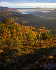 The Forest in Autumn (Donald Beaton) Tags: uk scotland highlands glen affric strathglass carn fiaclach mist forest woodland wood trees landscape sun morning light scots pine birch autumn fall ecosse schottland escocia sony a7 fe 2870 scene