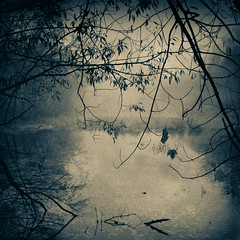 The Pond (William Flowers) Tags: pond earlymorning leaves branches trees autumn fall dreams memories peek