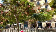 WP_20160913_13_12_13_Pro.jpg ('LPG') Tags: barcelona catalonia europe lpg night spain catalunya