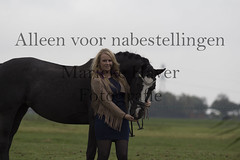 15 oktober 2016-88 (MZorro4) Tags: mariekehaverfotografie oudesluis schagen paardenfotografie portretfotos rijden wwwmariekehaverfotografienlpaarden