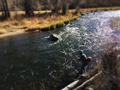 Williams fork Colorado (animal vegetable miracle) Tags: flyfishingcolorado womenwhofish flyfishing flytying river water coloradosun colorado browntrout troutfishing trout mountains world wow nature fish sunshine rural serene fun natur outside getoutthere dof afternoon sun adventure