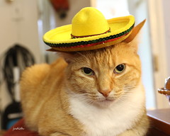 Bad Hombre (judecat (back with the pride)) Tags: cat feline redtabby catinhat sombrero halloween simon