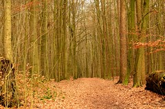 Waldweg (schmidtvossloch) Tags: winter germany landscape deutschland nikon laub landschaft wald bltter baum schleswigholstein