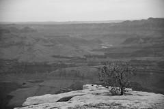 Grand Canyon 2014 (Gilles LEFEUVRE) Tags: park summer usa america canon nationalpark colorado holidays unitedstates grandcanyon canyon neva fleuve 2014 grandcanyonnationalpark etatsunis parknational 5dmarkii canon5dmark2 5dmark2
