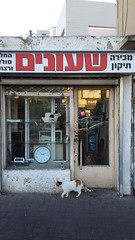 Cats in showcase (Arieh Sz.) Tags: cats cute shop funny felines showcase oldshop streetcats cityphotography