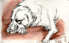 cebolla (jc_figuera) Tags: sketch drawing line ucv perro dibujo fau cebolla sketchers boceto