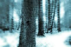 Matrix; Error (kokorage) Tags: decim8 pixlr pixlrexpress snapseed tree baum bäume trees nature abstract alternative matrix glitch wood wald winter glitchart databend databending art