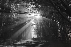 Morning stroll through the forest (pixelmama) Tags: california blackandwhite bw forest woods explore halfmoonbay sunbeams mossbeach thehumanelement pixelmama mossbeachwoods connieswoods